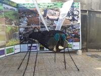 Comissão de Meio Ambiente da Câmara apoia ações do Dia Mundial da Limpeza em Anápolis